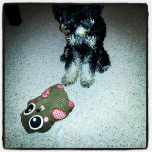 The death of Justin Beaver... Harley found he loved Justin Beaver too much & his stuffing came out!