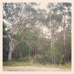 Bush surrounds - visiting my childhood home for the afternoon