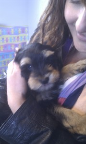 the day we picked up Harley!