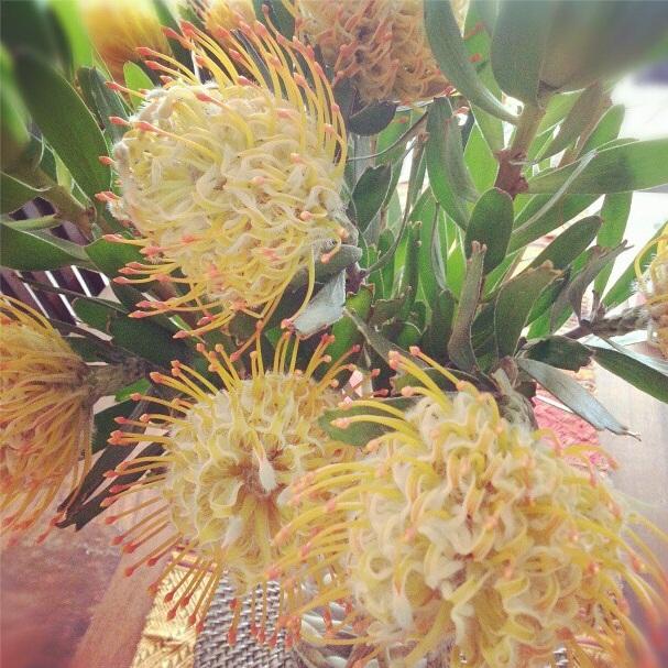 fridayflowers3