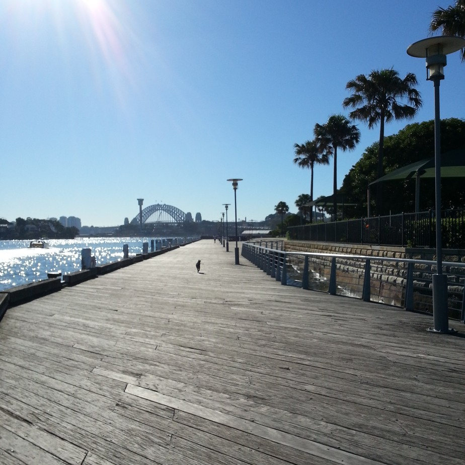 running with Harley - he's the black dot way up ahead! And yes that's the Sydney Harbour Bridge!