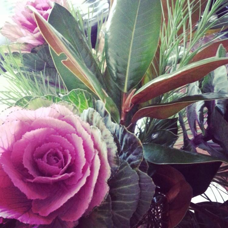 this week's beautiful blooms