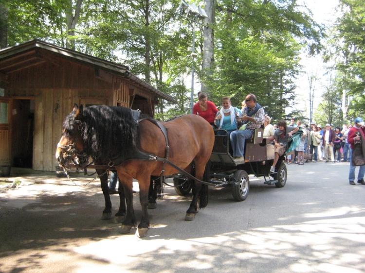 Horse-drawn cart at Neuschwanstein